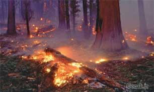 تصویر آتش سوزی کوه های سپیدار میمند