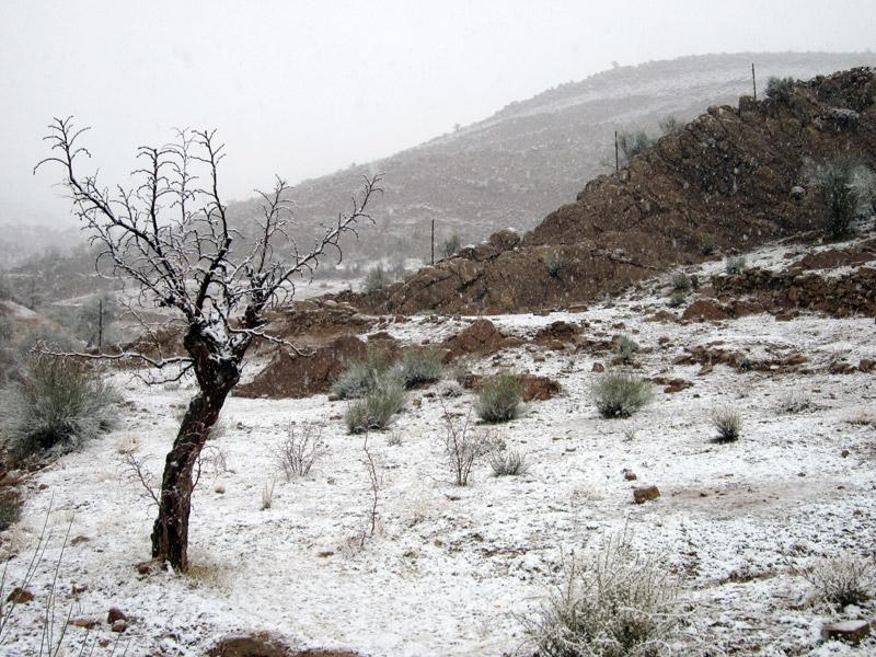 Photo of بارش برف پس از سالها