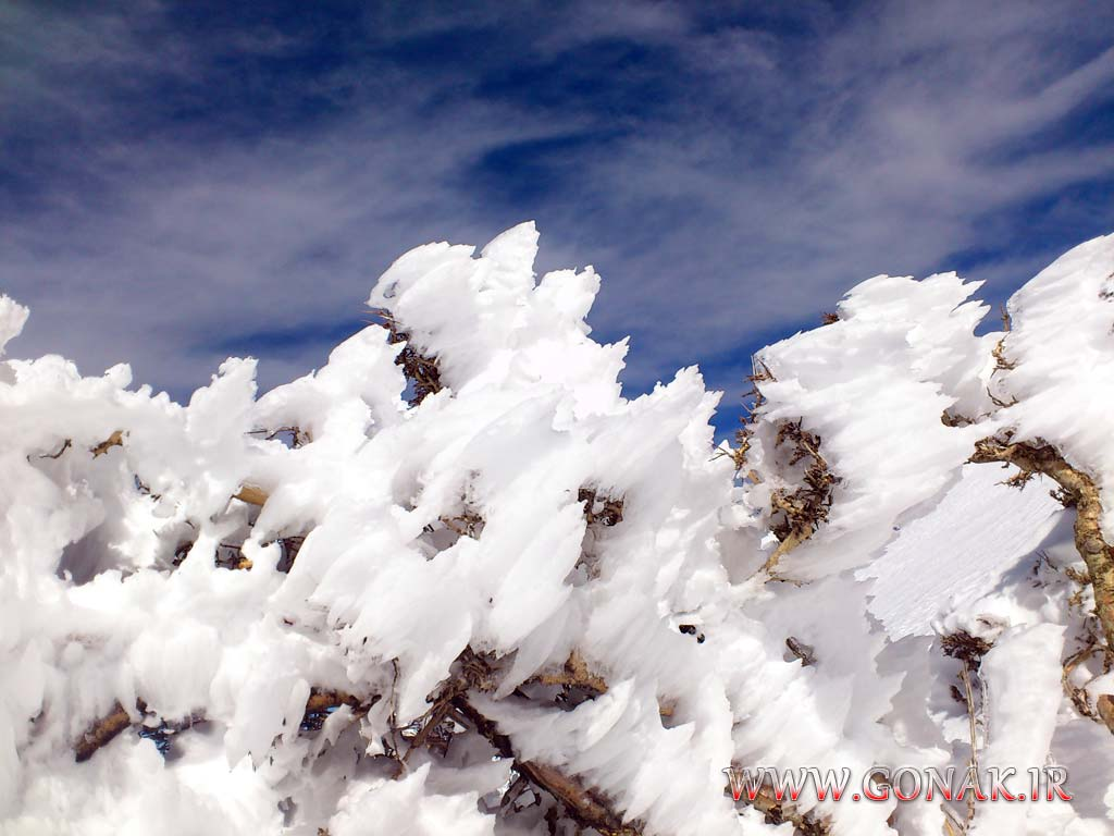 Photo of تصاویر دیگری از زمستان برفی